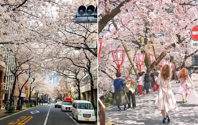 12 hình ảnh chứng minh đất nước Nhật Bản tới từ hành tinh khác - 11