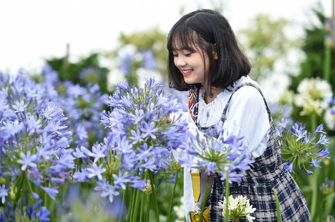 Vườn thanh anh tím biếc, cánh hoa lớn và nở rộ, là vị trí những bạn gái trẻ thích thú, mải mê chụp ảnh.